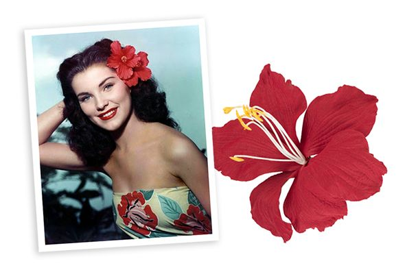 5adf3f550dc31 Tropical Hair Flower Red Hibiscus Pinup Inspiration Flower Hair, Flowers In  Hair, Rockabilly Hair