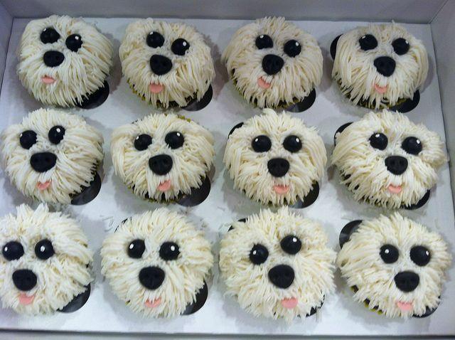 Maltese Cupcakes Dog Cakes Dog Cupcakes Puppy Cake