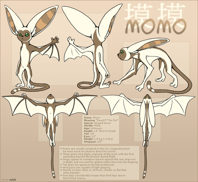 Avatar : Momo Reference Sheet by Nylak on deviantART | Drawing ...