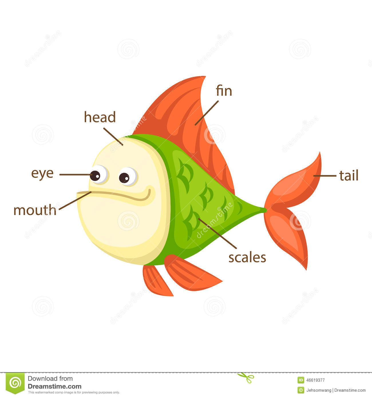 Fish Parts For Kids