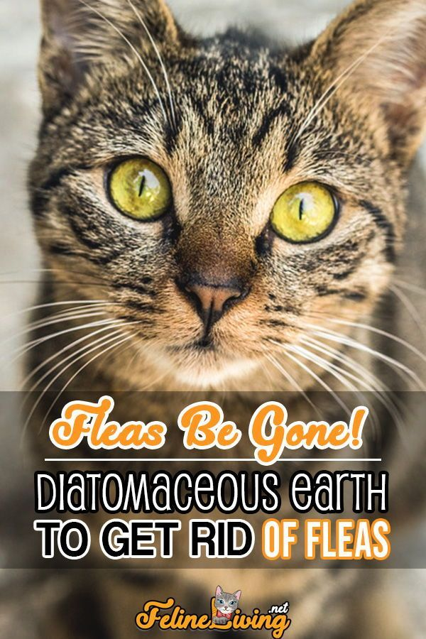 Diatomaceous earth is very useful with cats if done right