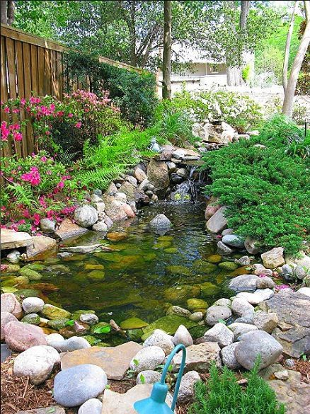 What S Wrong With My Garden Pond Water: I Like The Plants So Close To The Pond Border