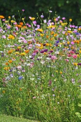 Blumenwiesen und weitere nachhaltige Garten-Ideen