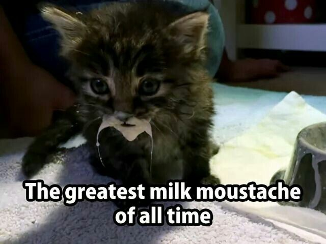 Plz Remember That Kittens Puppies Should Be Fed Their Own Special Kitten Puppy Milk Formulas When Their Cat Dog Cute Animals Funny Animals Cute Funny Animals