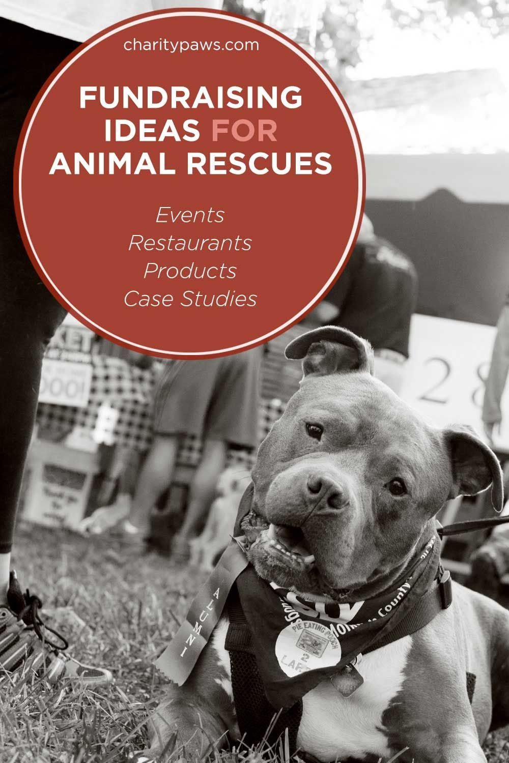 Fundraising Ideas For Animal Rescues To Raise Funds & Have Fun