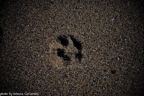 zampe sulla sabbia
