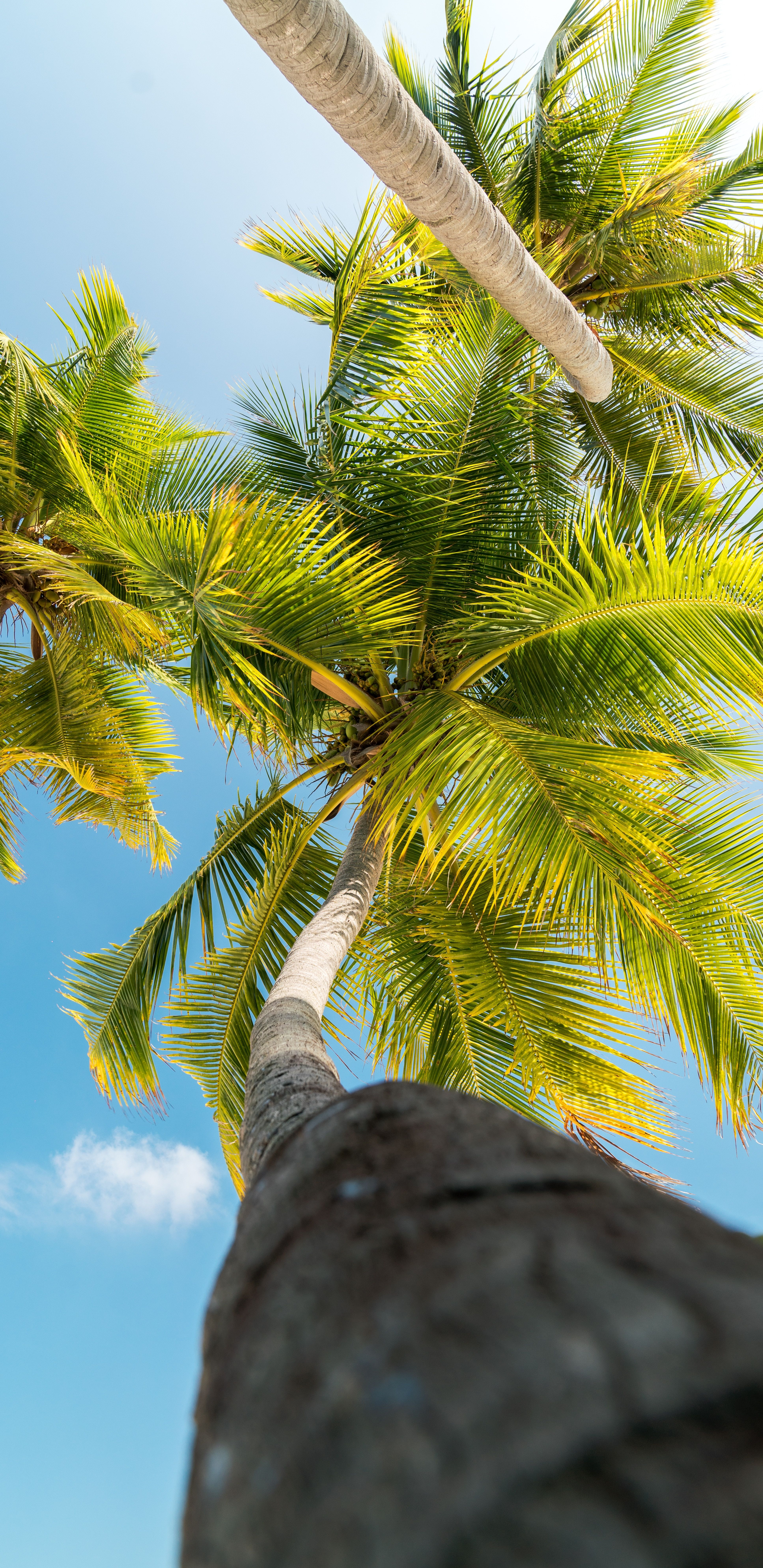 Tropical Wallpaper For Iphone X Tropical Wallpaper Palm Trees Wallpaper Leaf Photography