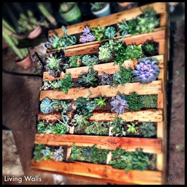 pallet living wall garden landscaping pinterest. Black Bedroom Furniture Sets. Home Design Ideas