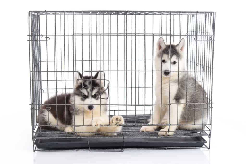How To Get Puppies To Stop Crying In Their Crate At Night Ideas