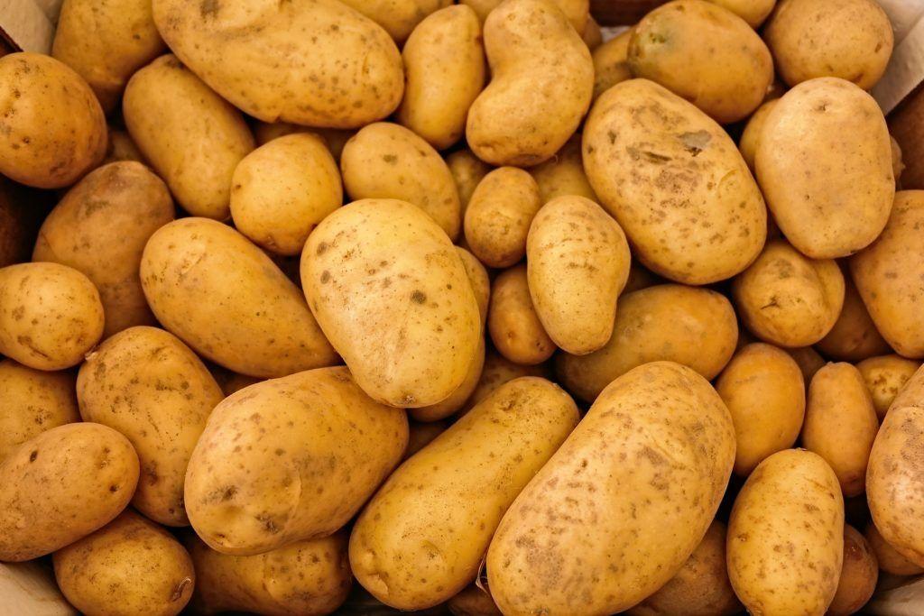 Pomme de terre : 5 variétés naturellement résistantes au