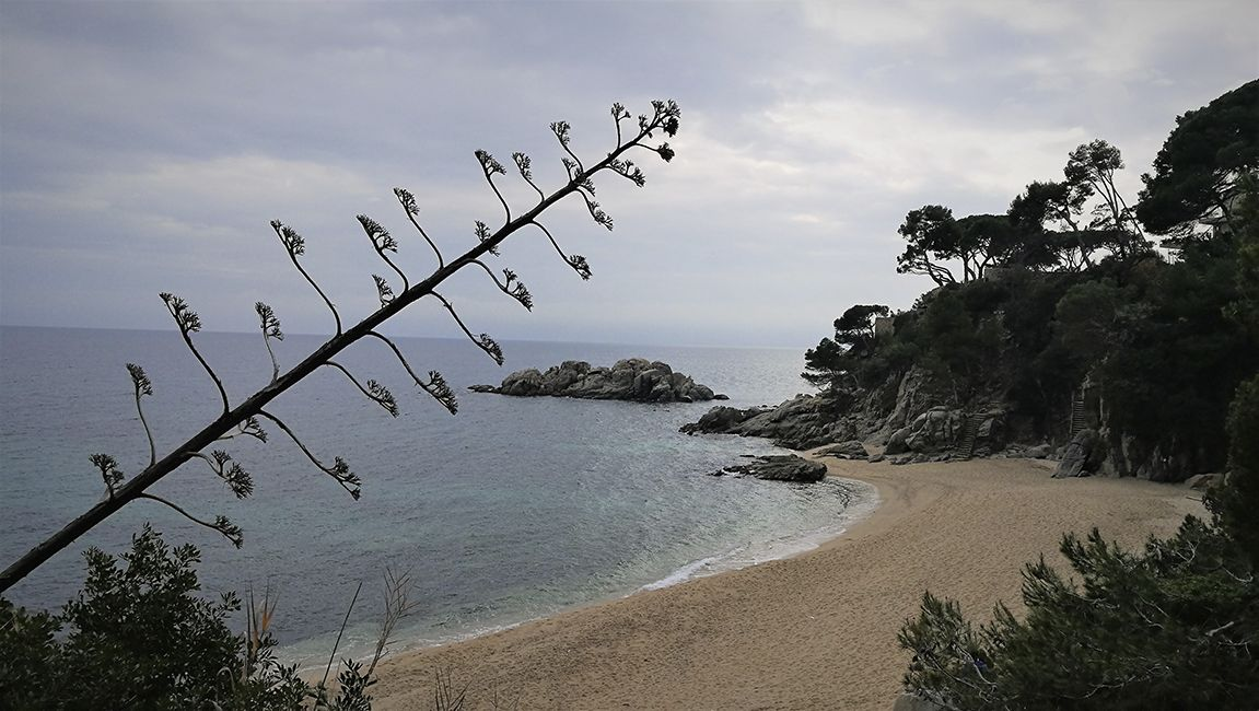 Rutas Mar Mon Cami De Ronda Platja D Aro A Sant Antoni De Calonge Rutas Senderismo España Rutas Viajes