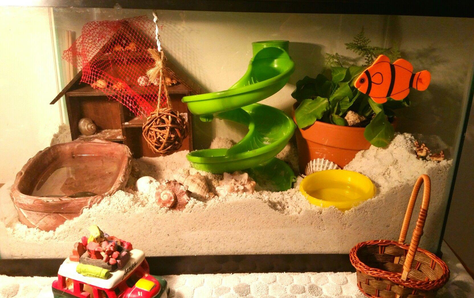 Hermit crab super sand playhouse set up. Great crabitat!!   Hermit ...