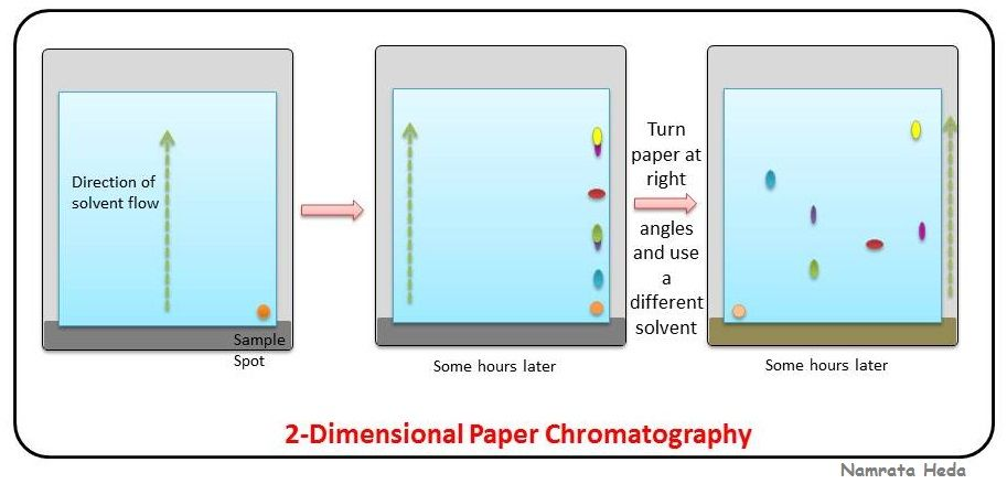 2 D Paper Chromatography Types Of Chromatography Pinterest
