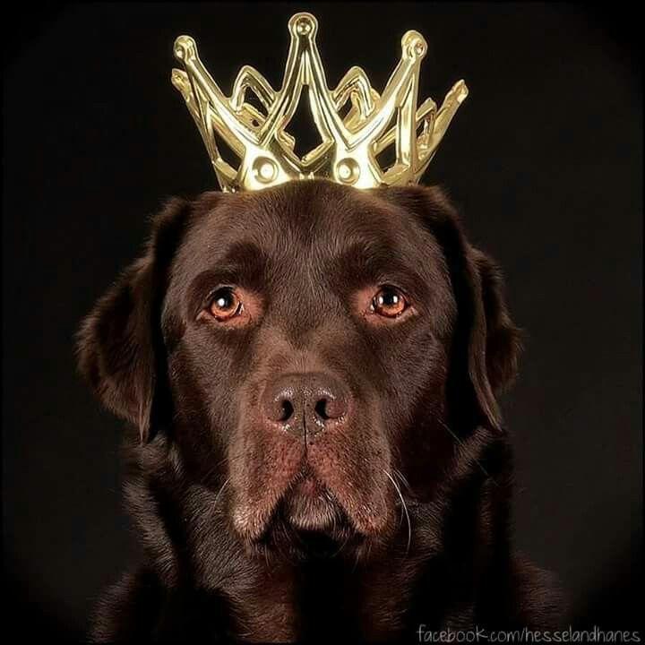 Fijne Koningsdag allemaal! Happy Kingsday! #koningsdag