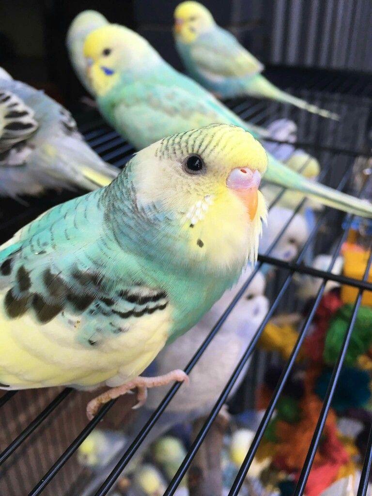 Eng Wie Birds Spielen