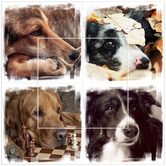 Cute Dogs  4 Digital Collage Sheets CP149  4x4 or by CobraPrints, $3.90