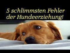 Unbedingt Anschauen Mein Hund Der Allesfresser Hundeerziehung Hundeschule Training Hunde Youtube Hund Funnies Hunde Tapete Retriever Welpen