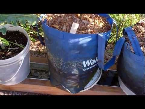 Using A Walmart Shopping Bag As A Grow Bag On The Self Watering Rain