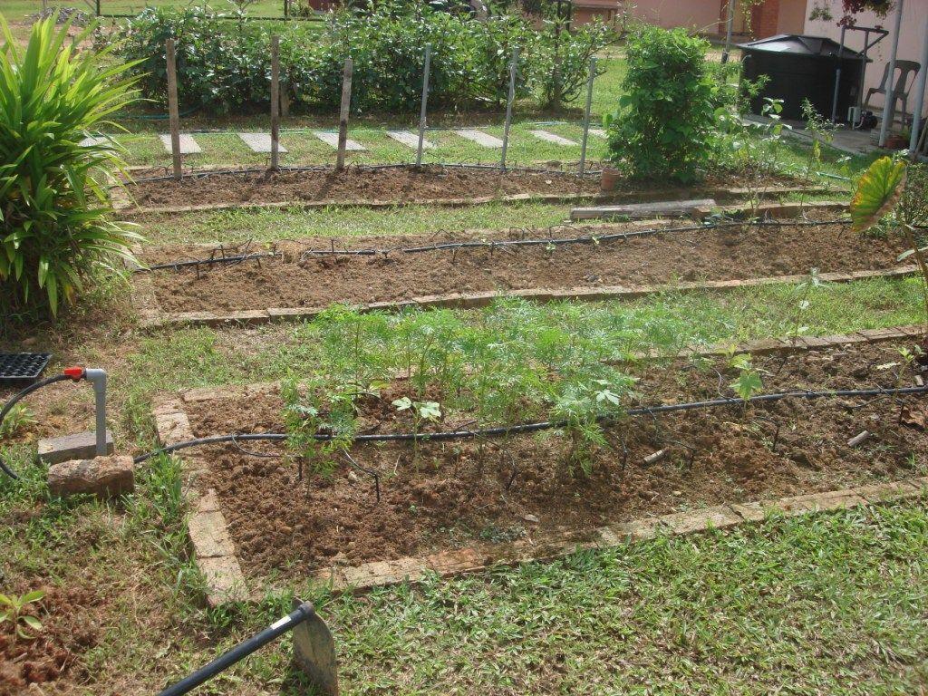 Small Vegetable Garden Ideas | My little vegetable garden: Garden ...