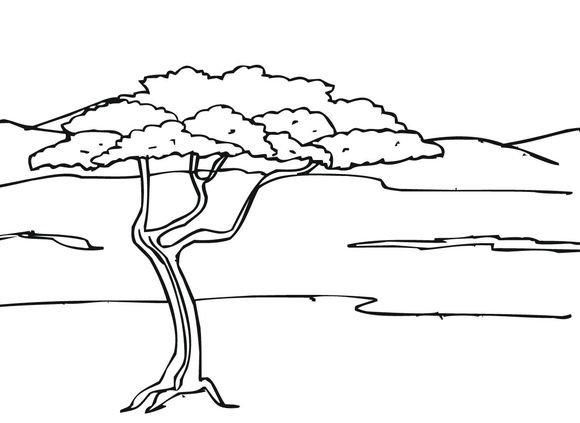Acacia Tree In Savanna Coloring Page Tree Coloring Page Acacia
