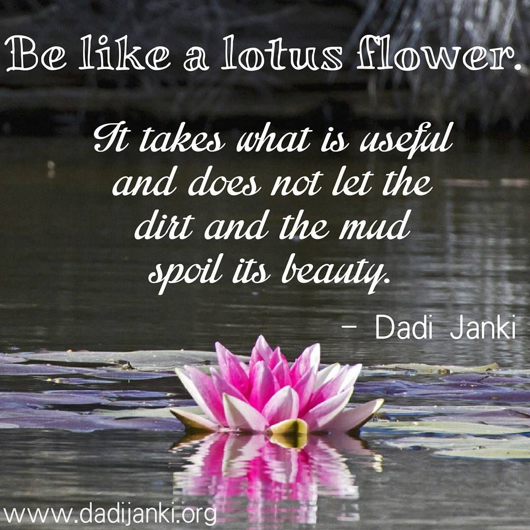Be Like A Lotus Flower Dadi Janki Meditation Spirituality