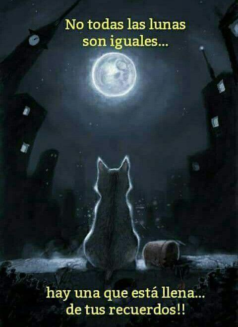 No Todas Las Lunas Son Iguales Movie Posters Poster Movies