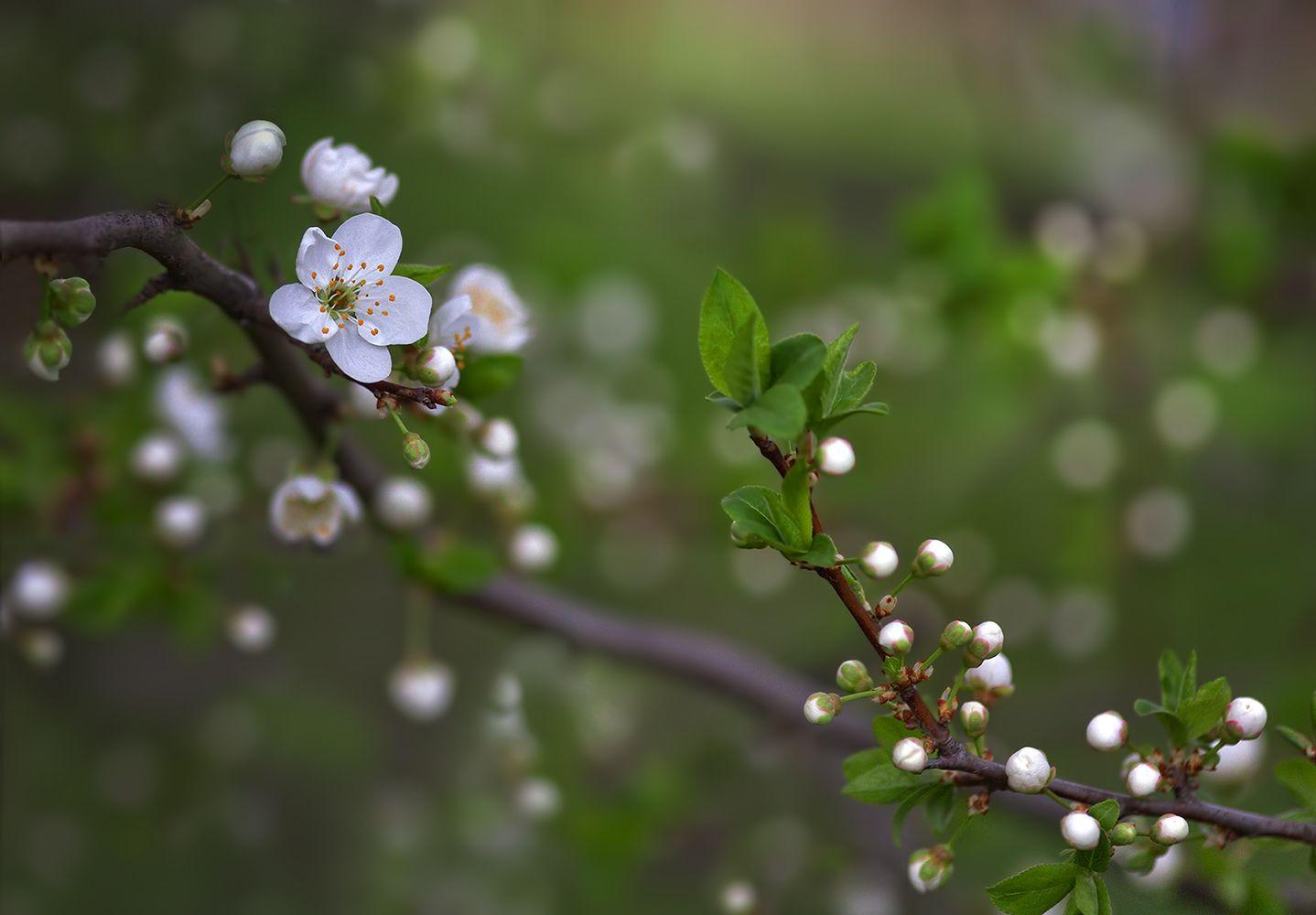 дыхание весны картинки они как золотистый