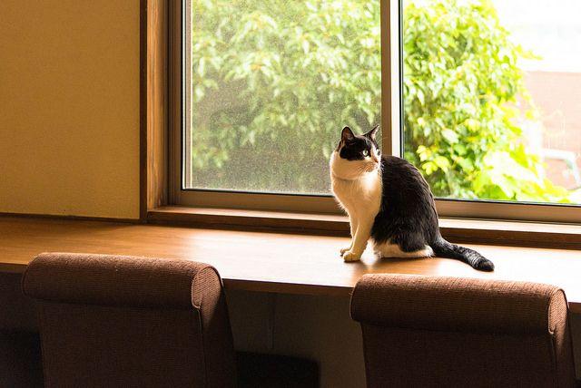 cat by NEKOFighter on Flickr.cat