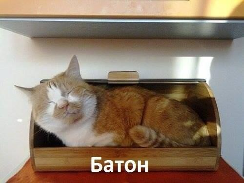 Cat In A Bread Box New Pin By Лебедь Задунайская On All About Cats Pinterest Cat