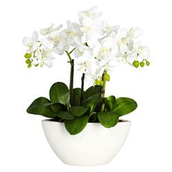 Add elegance to any space with a decorative 20 inch mini calla lily phalaenopsis orchid silk flower arrangement overstock shopping great deals on nearly natural silk plants mightylinksfo