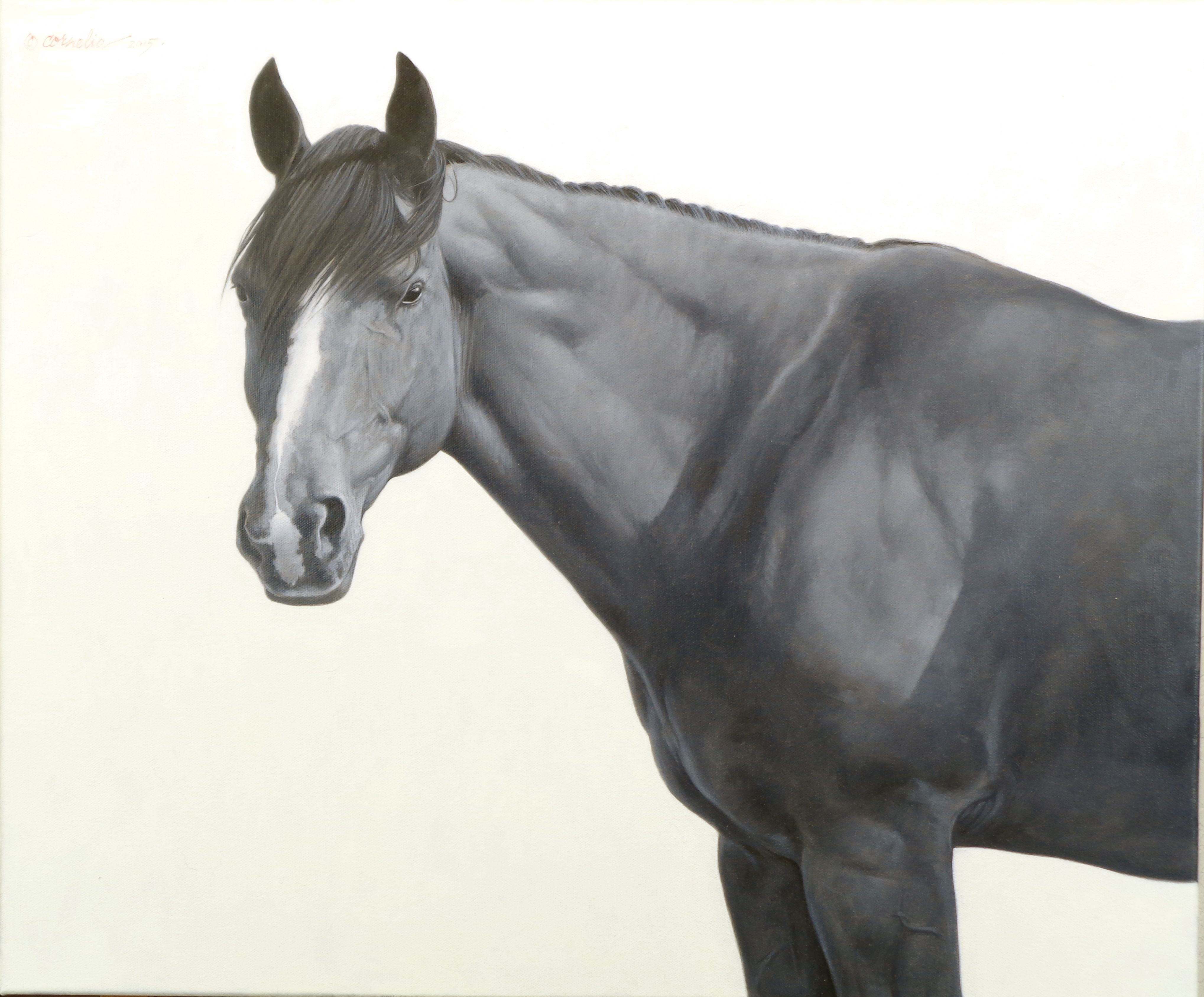 Study For Big Bay Oil On Canvas By Jerry Cornelia Available At The Catherine Louisa Gallery Catherinelouisagallery Com Ho With Images Horse Painting Horse Art Horses