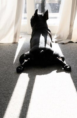 Boston Terriers really do have the most healthy outlook on life. Live well, Love much, sleep often...