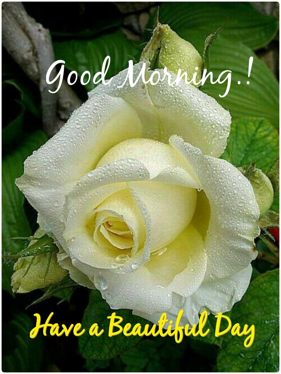 Pin By Anoop Patel On Good Morning Pinterest Flowers Beautiful