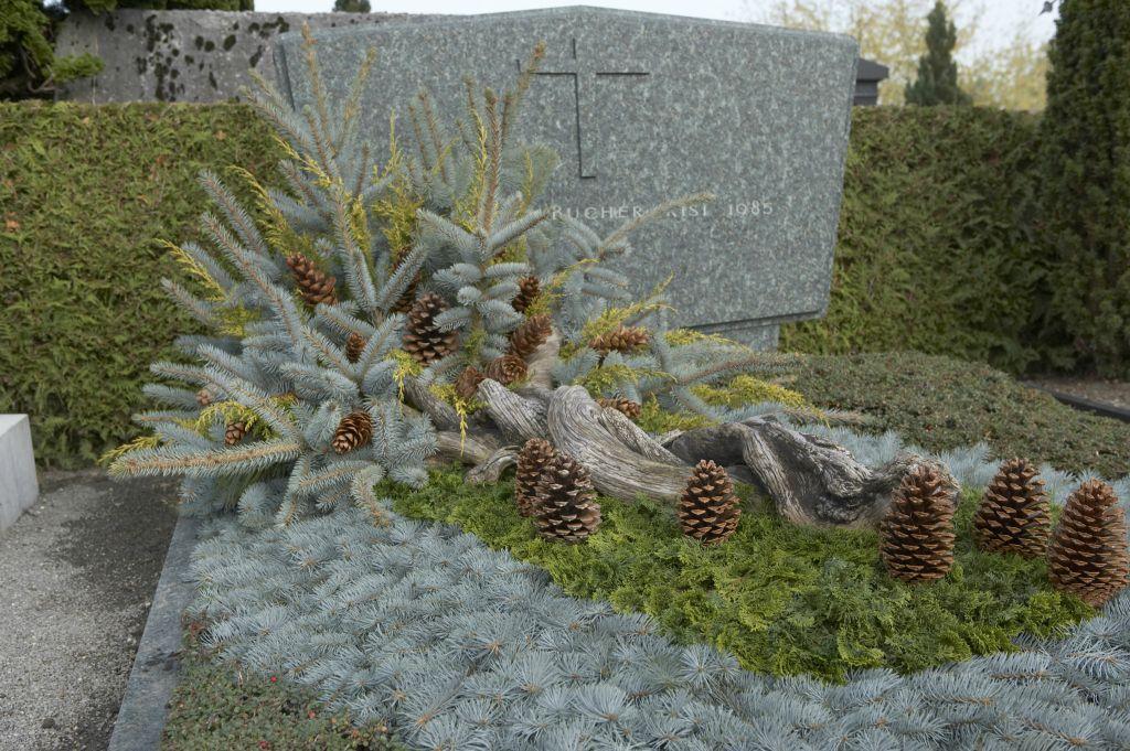 Winter Grabbepflanzung
