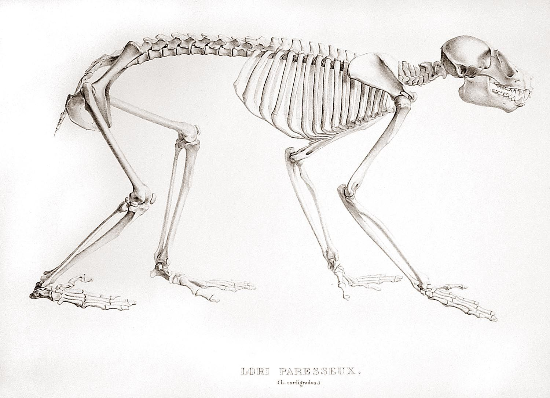 Gemütlich Anatomie Des Parodontiums Zeitgenössisch - Menschliche ...