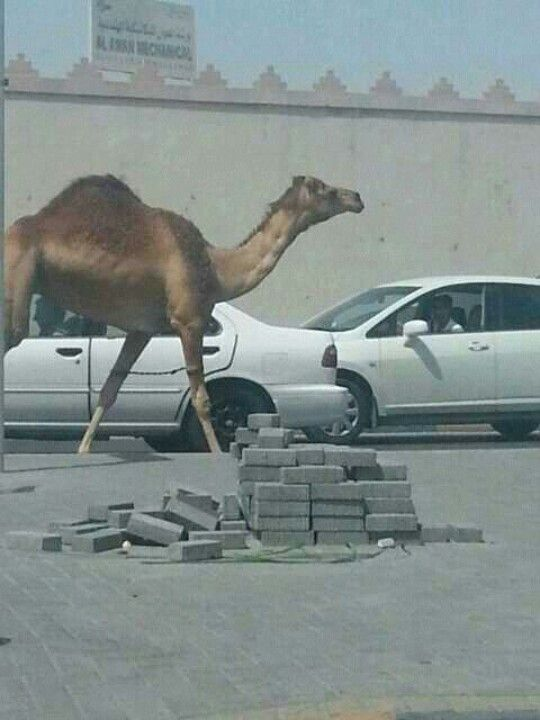 Pin On Bahrain News