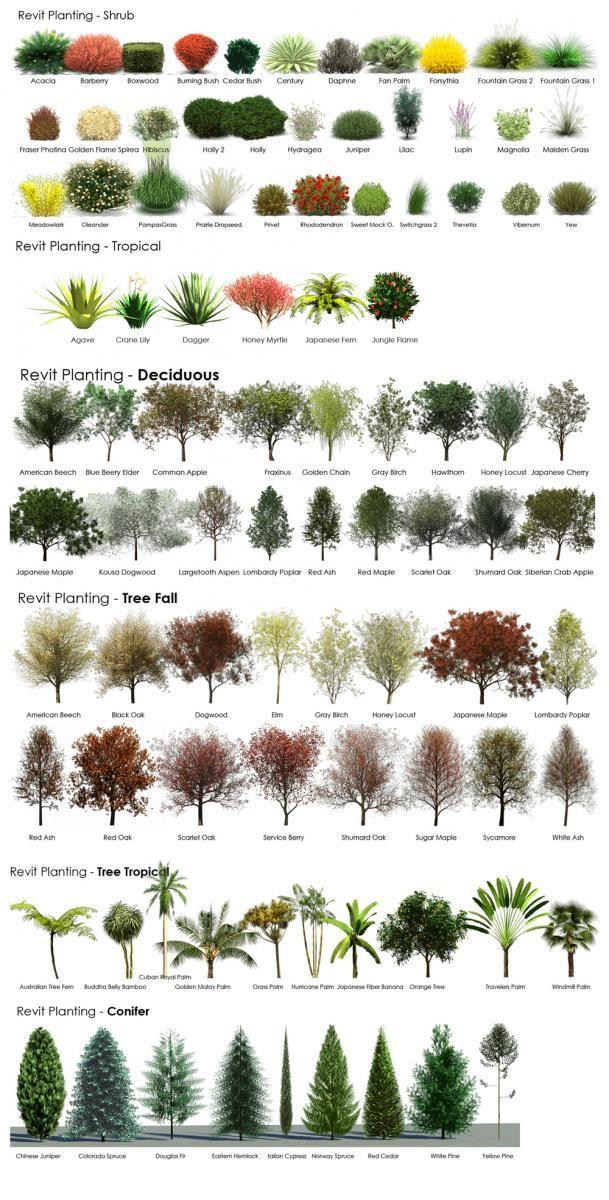 Revit Rpc Tree Guide Ide Taman Depan Kebun Ide Berkebun