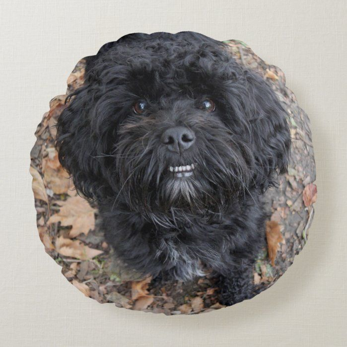 Cute black dog Round Pillow