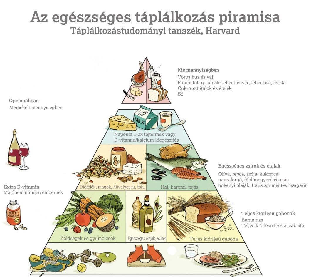 A fehérje diéta - Mit érdemes tudni róla?