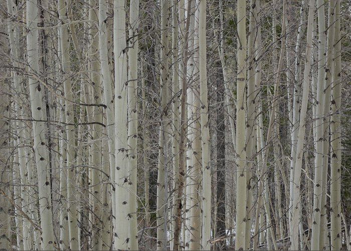 Beyond The Aspen Veil Greeting Card for Sale by Whispering Peaks Photography
