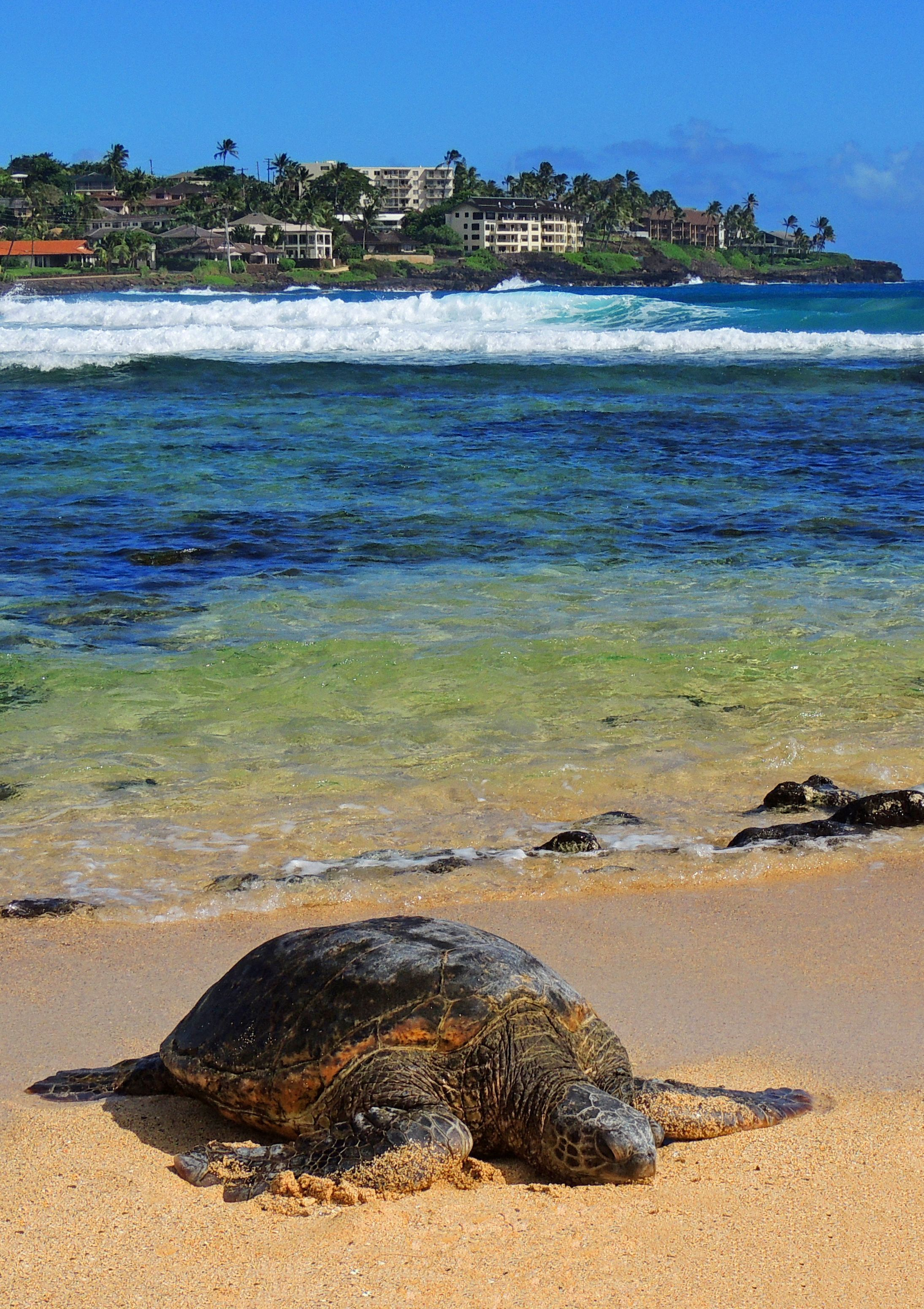 Explore Hawaii On A Cruise Ship