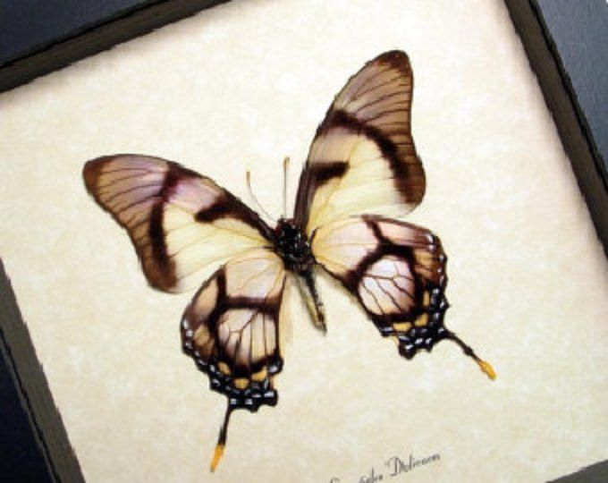 Real Conservation Quality Framed Butterfly Display 495 | EMBROIDERY ...