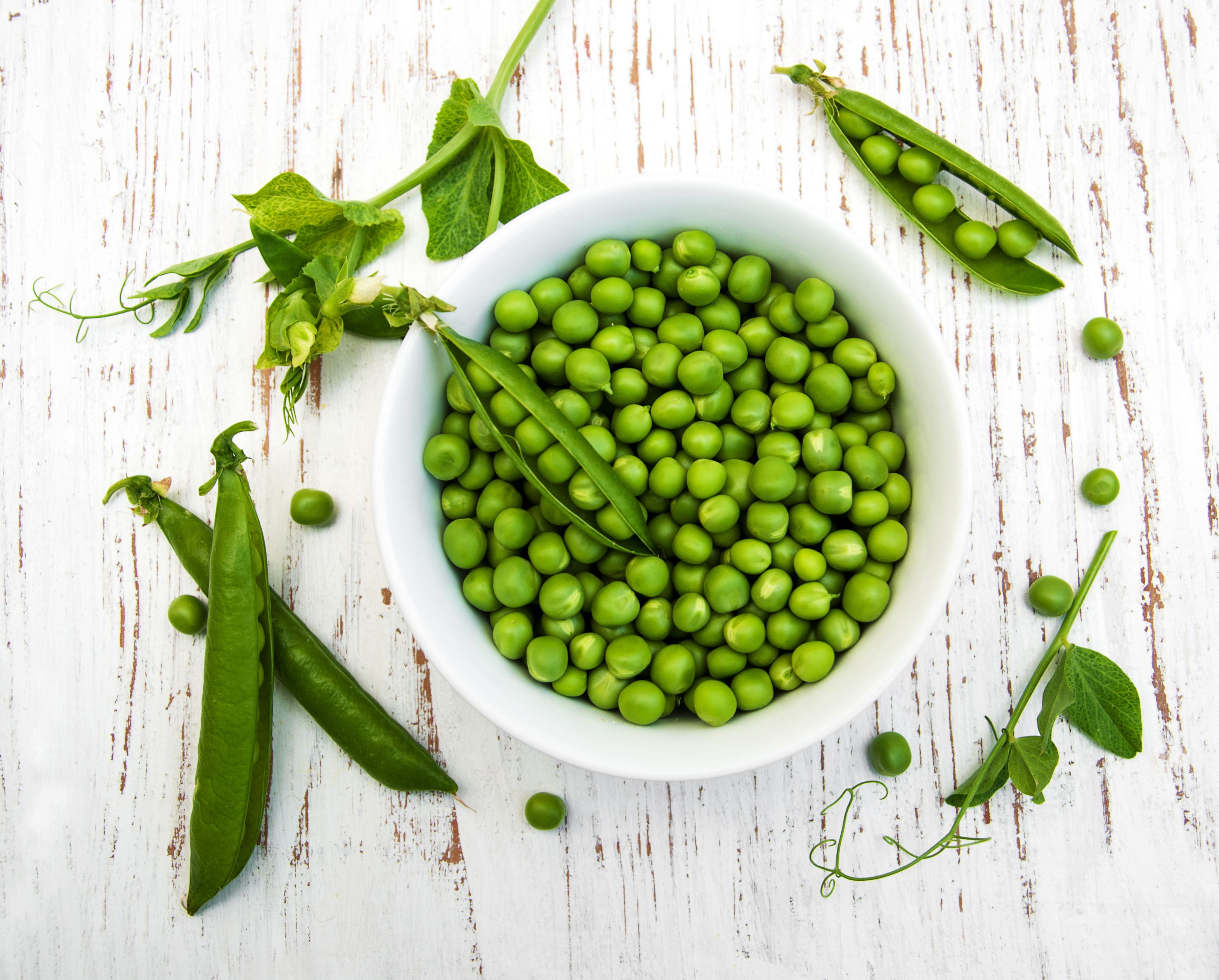 Can Cats Eat Peas? Cuteness in 2020 Dog food recipes