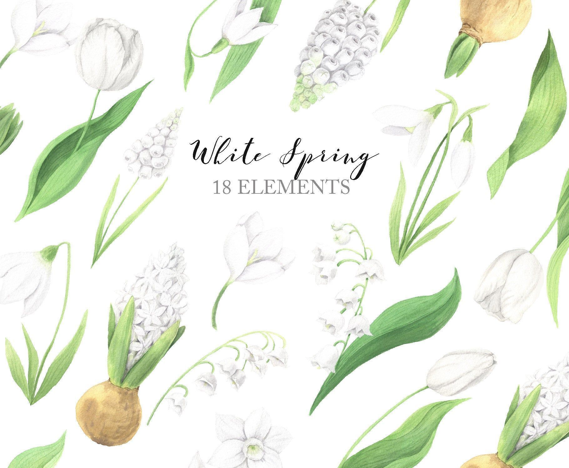 Watercolor Spring Flower Clipart White Tulip Snowdrop Lily Of The Valley Hya Clipart Flower Hya Lily In 2020 Flower Clipart Watercolor Tulips Spring Flowers