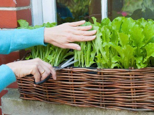 Indoor vegetable gardening ideas