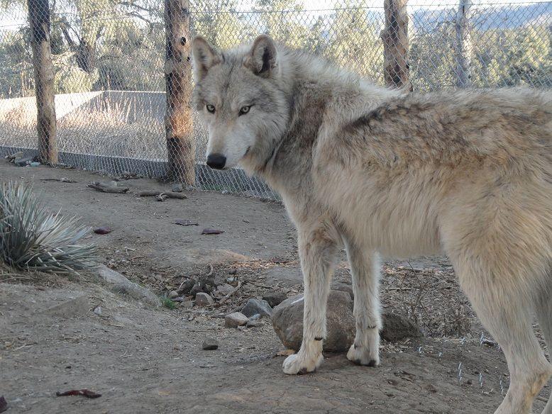18++ Hoke county animal shelter images