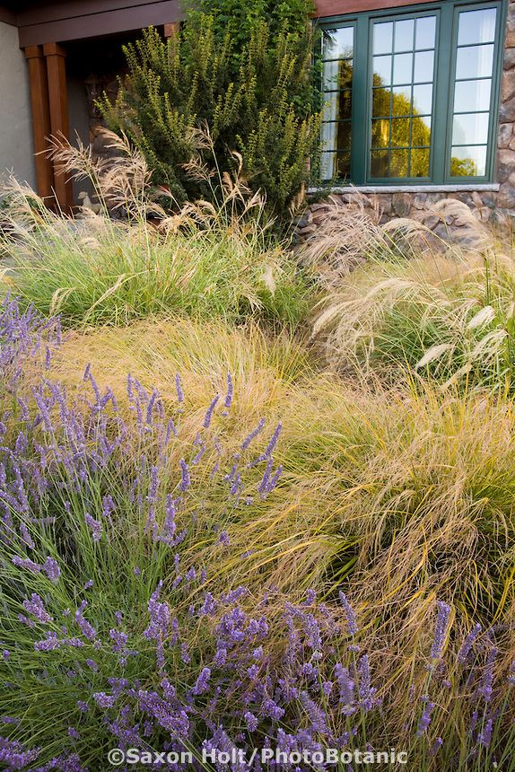 Front yard meadow garden with ornamental bunch grasses for Ornamental grass garden designs