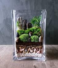 """Résultat de recherche d'images pour """"terrarium plante succulente"""""""