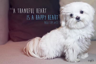 So Proud Teacup Puppies Maltese Dog Quotes Maltese Puppy