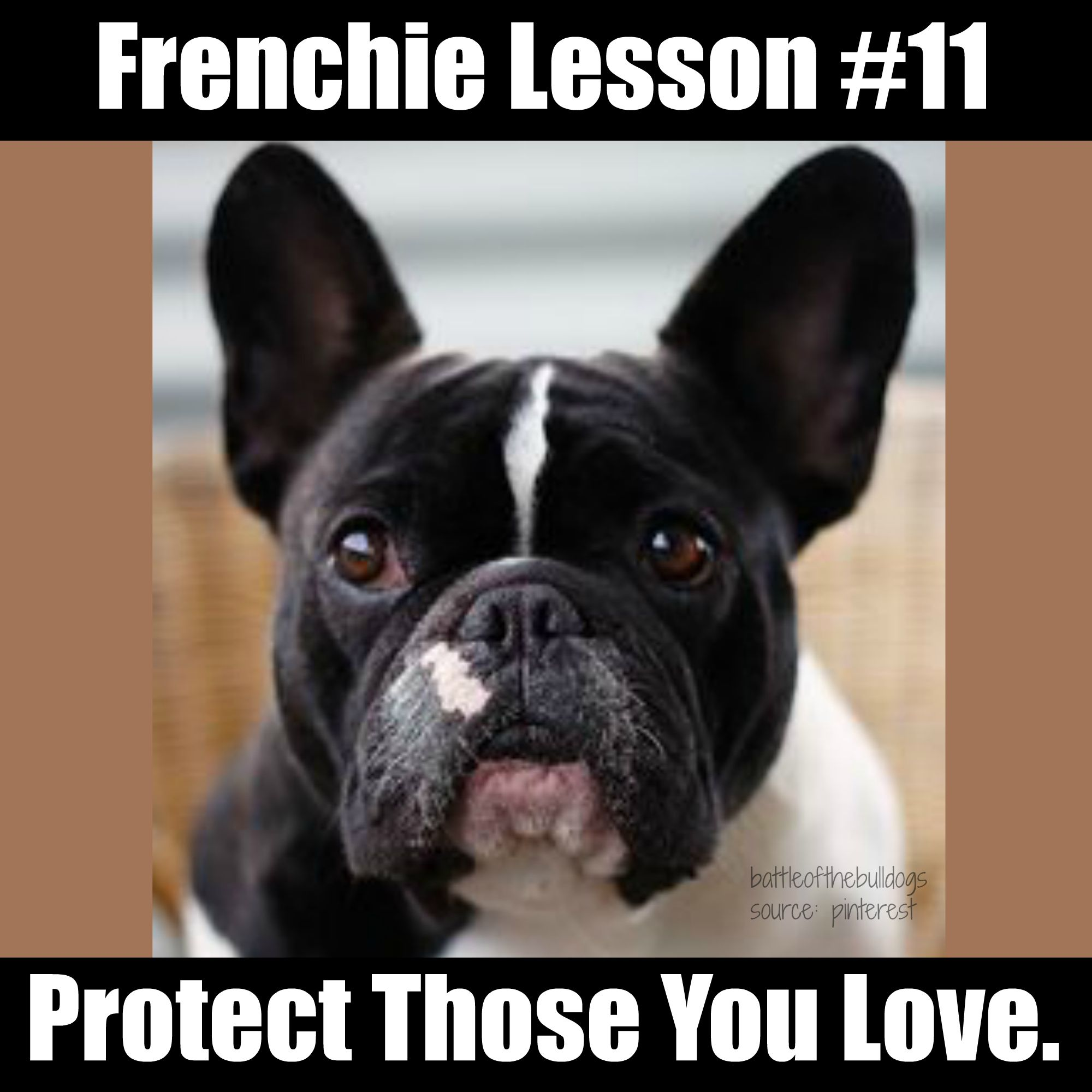 Frenchie Lesson 11 Animal Memes French Bulldog Frenchie